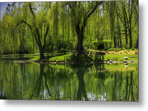 Willows Weep Into Their Reflection  Metal Print