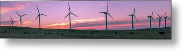 Wind Farm With Cows At Sunrise, Cowley Metal Print