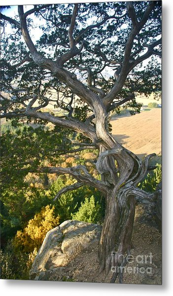 Wind Twisted Tree Metal Print