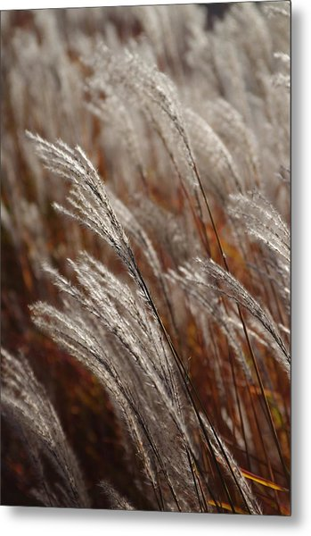 Windblown Grass Metal Print