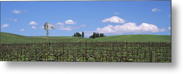 Windmill In A Vineyard, Napa County Metal Print