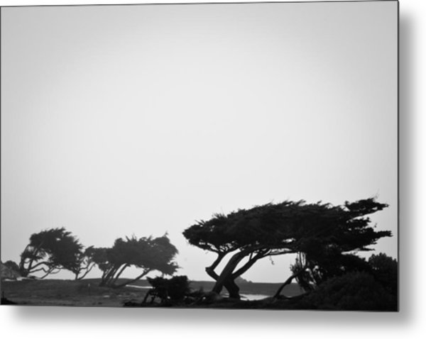 Windswept Shoreline Metal Print