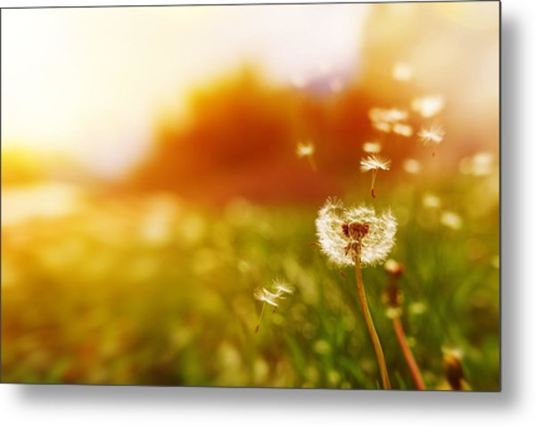 Windy Dandelion In Spring Time Metal Print by Stock_colors