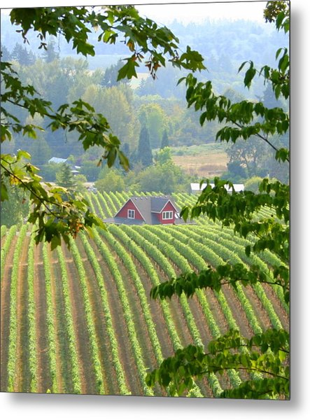 Wine Country Metal Print