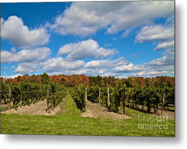 Wine In Waiting Metal Print