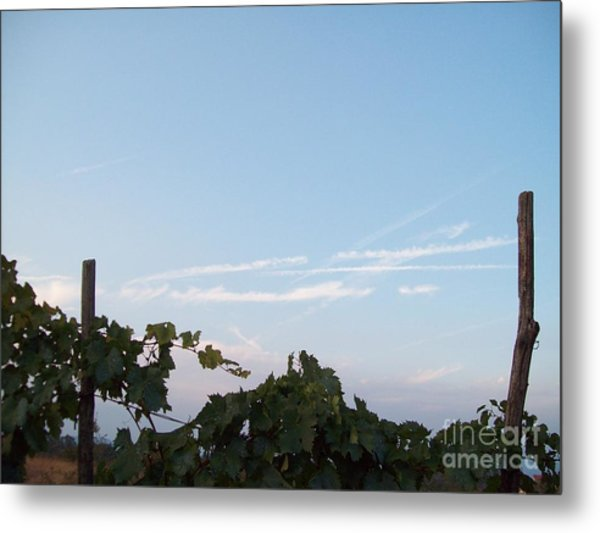 Wine Yards In Loppiano Metal Print