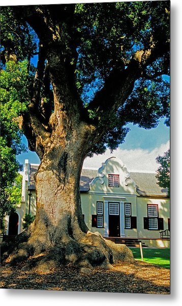 Winelands Manor Oak Metal Print