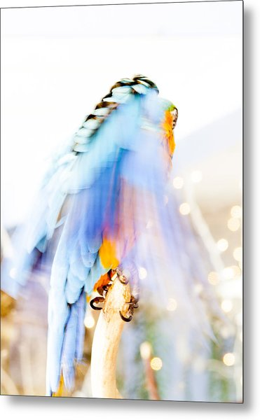 Wing Dream Metal Print