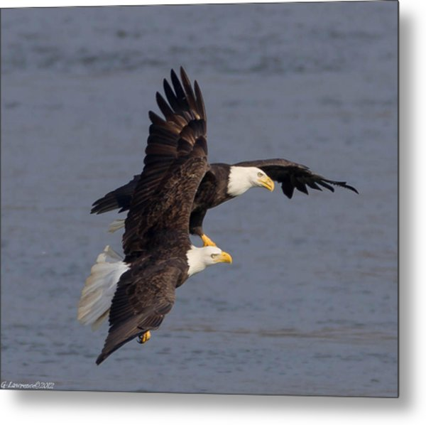 Wing Space  Metal Print by Glenn Lawrence