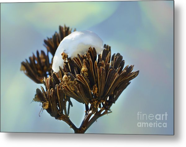 Winter Agave Bloom Metal Print