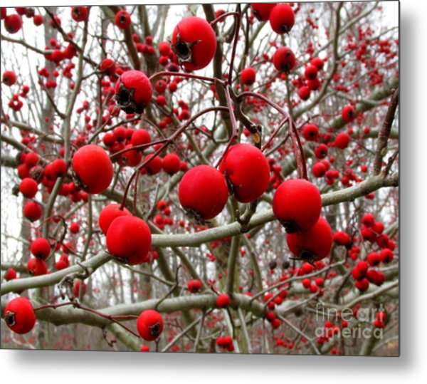 Winter Berryscape Metal Print