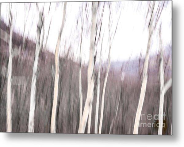 Winter Birches Tryptich 2 Metal Print