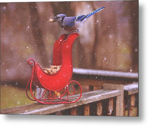 Winter Blue Jay #1 Metal Print