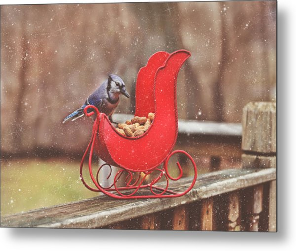 Winter Blue Jay #3 Metal Print