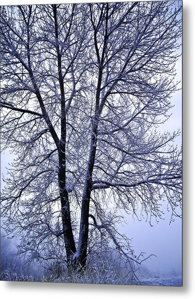 Winter Tree In Blue Fog Metal Print