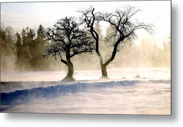 Winter Bluster Metal Print