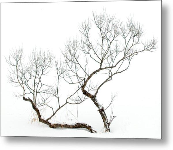 Winter Bonsai Metal Print