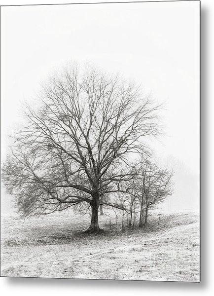 Winter Chrome Metal Print