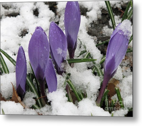 Winter Closing Metal Print