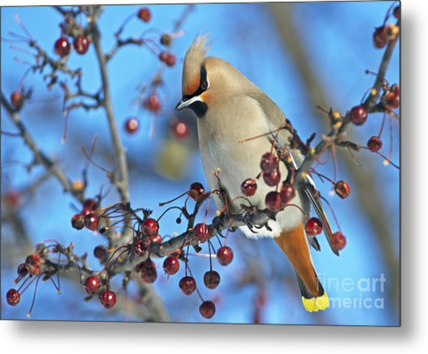 Winter Colors.. Metal Print