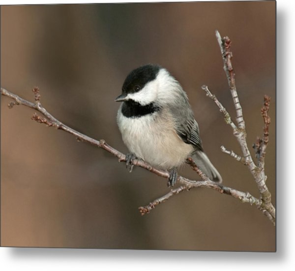 Winter Contemplation Metal Print