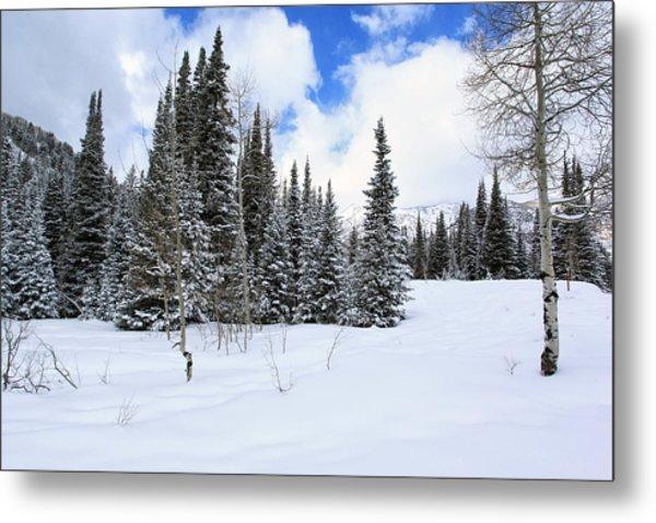 Winter Metal Print by Darryl Wilkinson