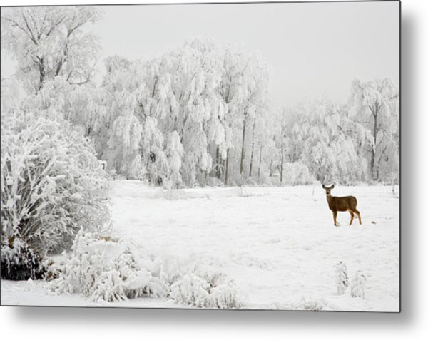 Winter Doe Metal Print