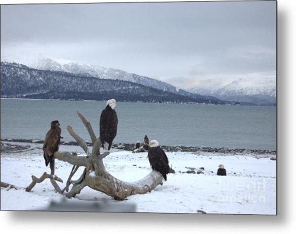 Winter Eagles Metal Print