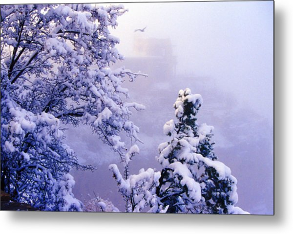 Winter Flight Of Raven Metal Print