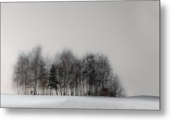 Winter Forest Metal Print by Gilbert Claes