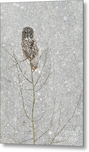 Winter Ghost Metal Print