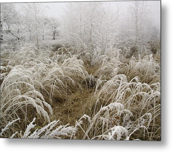 Winter Grass Metal Print by Magdalena Mirowicz