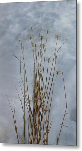 Winter Grass Metal Print by Susan Copley