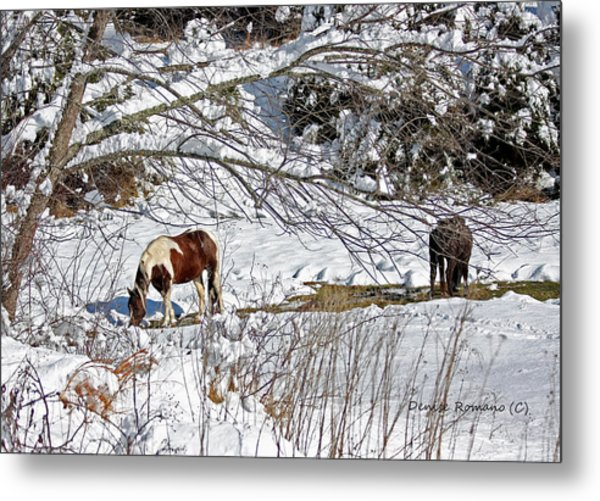 Winter Graze Metal Print