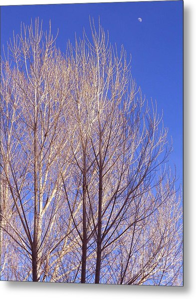 Winter High Node Metal Print