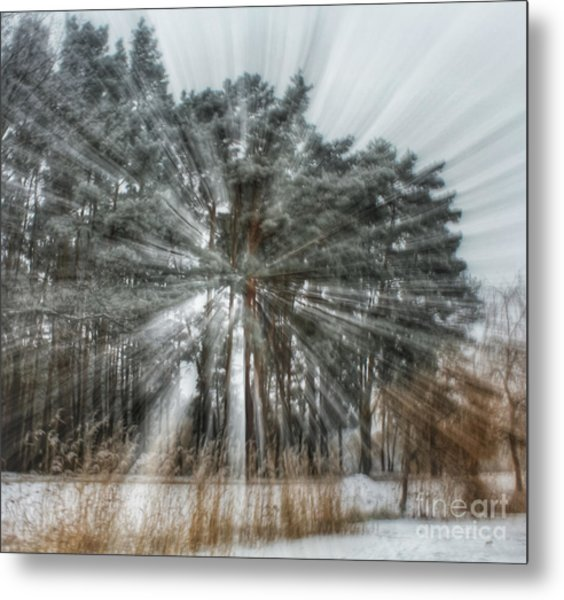 Winter Light In A Forest Metal Print