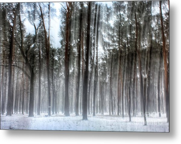Winter Light In A Forest With Dancing Trees Metal Print