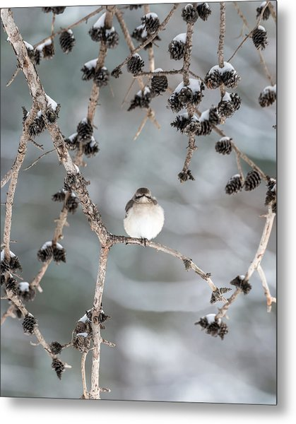 Winter Mockingbird Metal Print