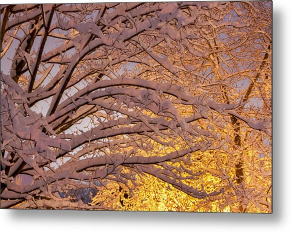 Winter Morning Metal Print