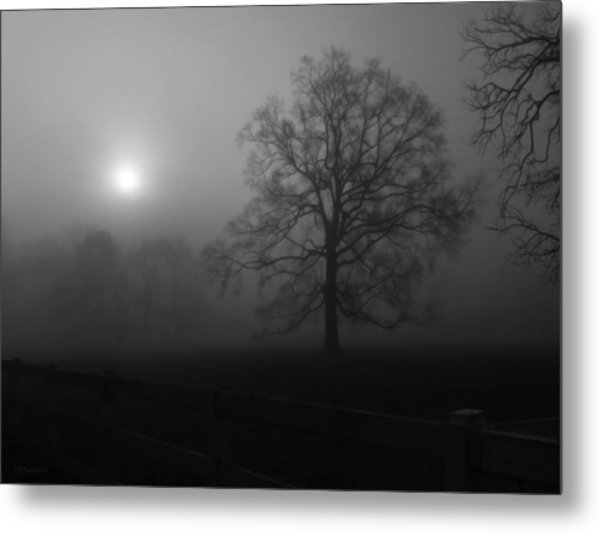 Winter Oak In Fog Metal Print