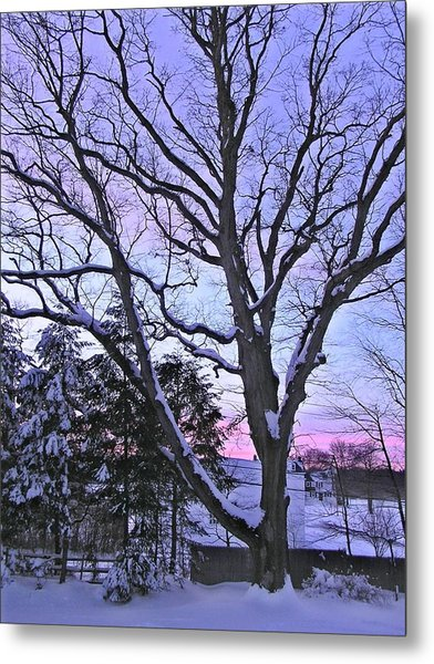 Winter Oak 2 Metal Print