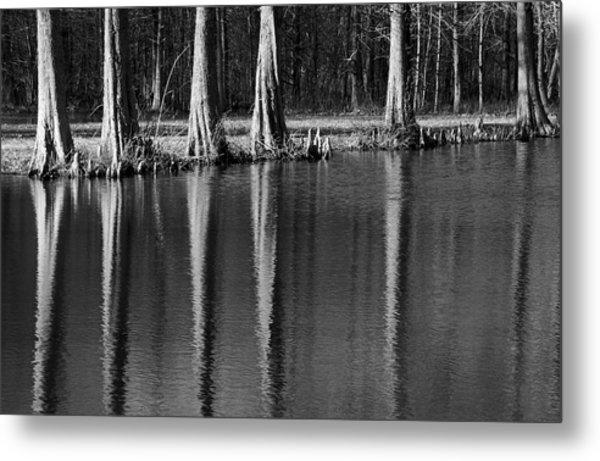 Winter Reflections - Cypress Tree Art Print Metal Print