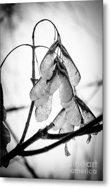 Winter Seeds Metal Print