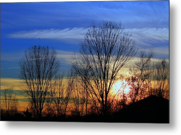 Winter Sky Metal Print by Rima Biswas