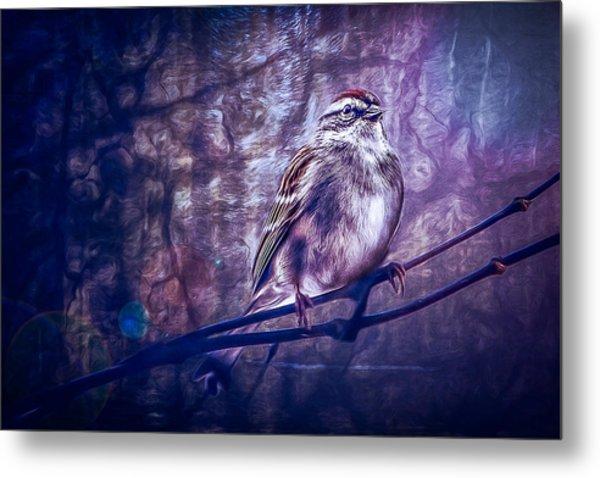 Winter Sparrow Metal Print