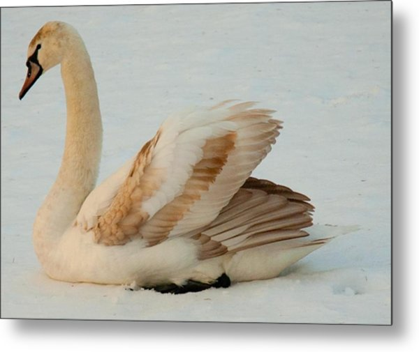 Winter Swan Song Metal Print