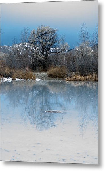 Winter Taking Hold Metal Print