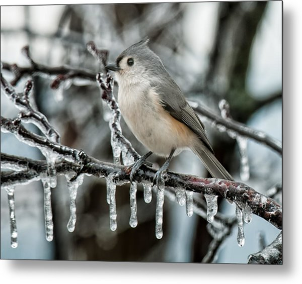 Winter Titmouse Metal Print