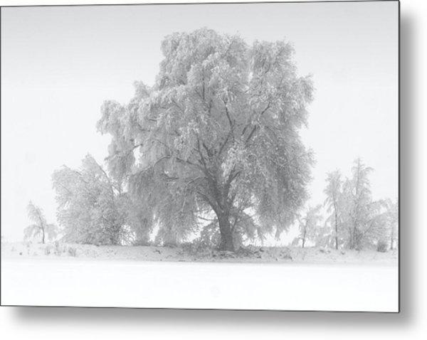 Winter Tree Metal Print