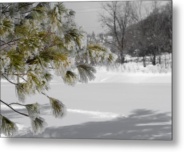 Winter Tree  Metal Print by Paulina Szajek